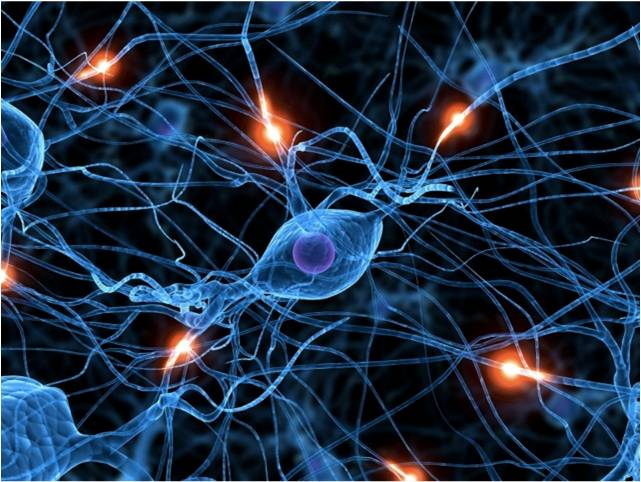 Genlerle bilgi aktarma 1